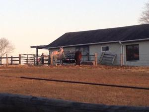 Another picture of the small horse farm on the periphery of the Battlefield.