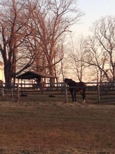 Horse Farm II