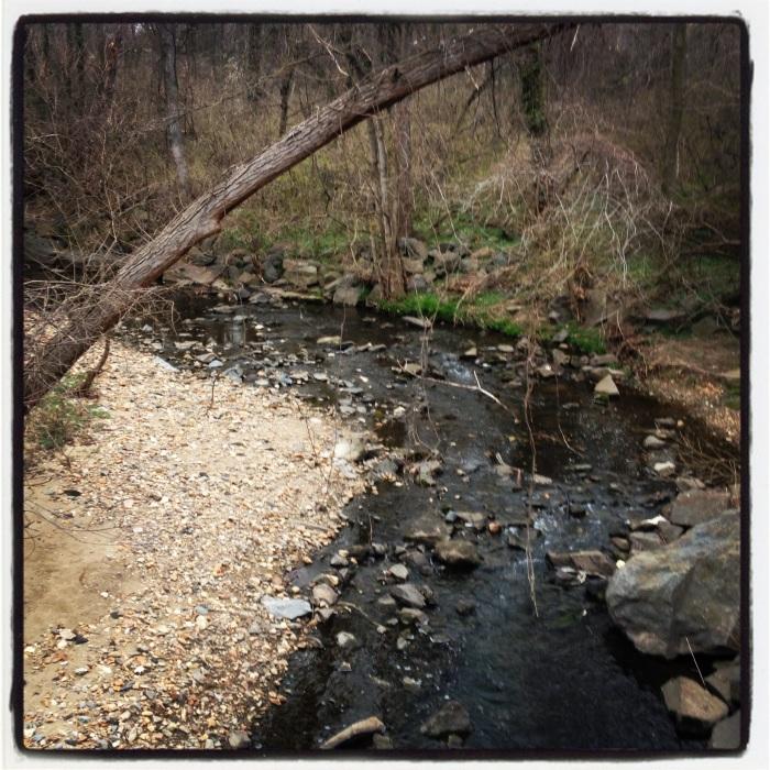 Creek at Bluemont.