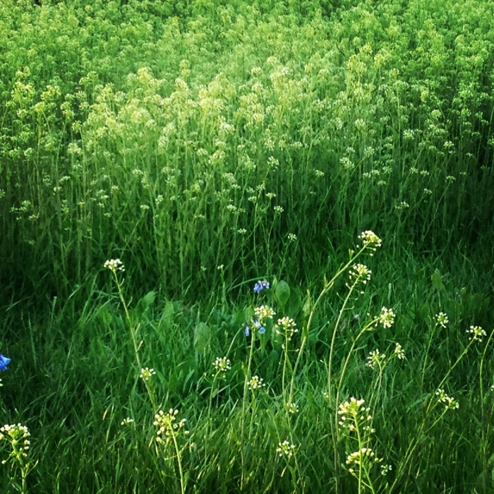 Weeds and Wildflowers.