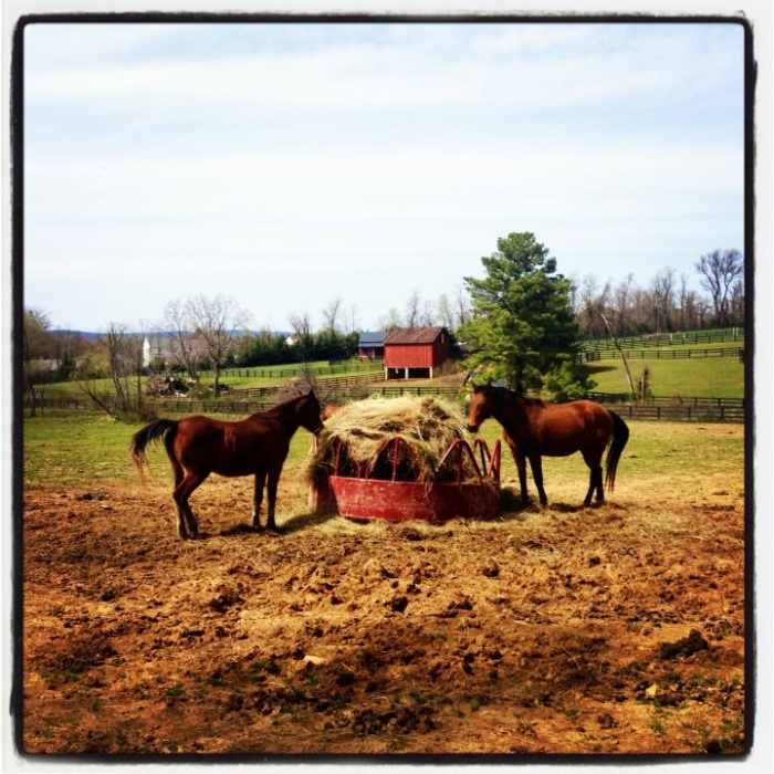 Small horse farm along the western portion of the WO&D Trail just outside Leesburg.