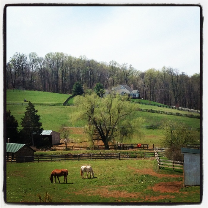 Another picturesque horse farm.
