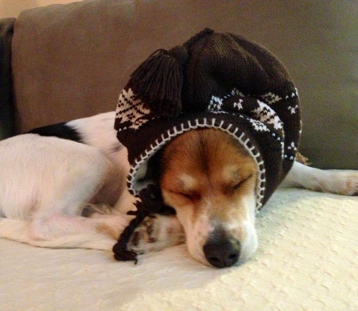 Alfie wearing an Peruvian Andean hat and sleeping.