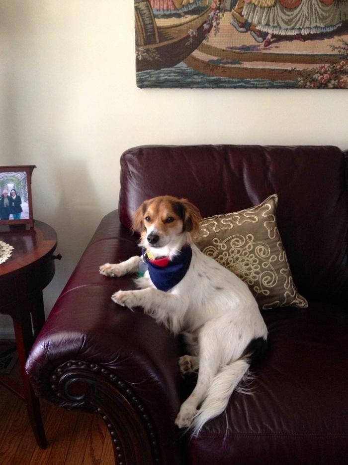 Alfie looking very regal.