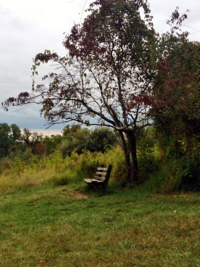 A lonely bench at an overlook on South Ridge.
