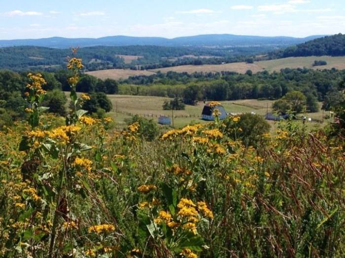A view from Sky Meadows State Park out in Fauquier County, about a 45 minute drive from my house.
