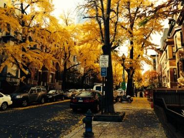 Bright leaves in D.C in late November!