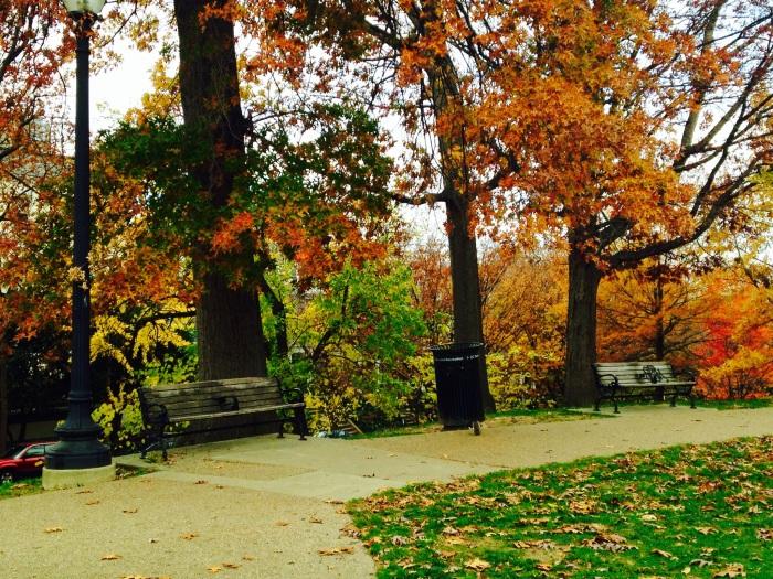 Fall foliage in the Kalorama neighborhod.