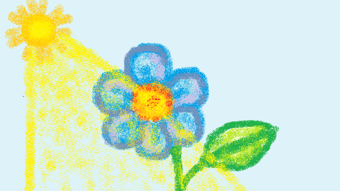 A flower in the sun.