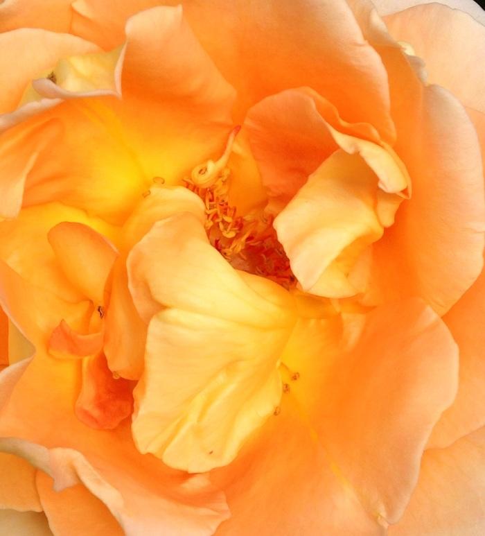 PRETTY FLOWER 3
