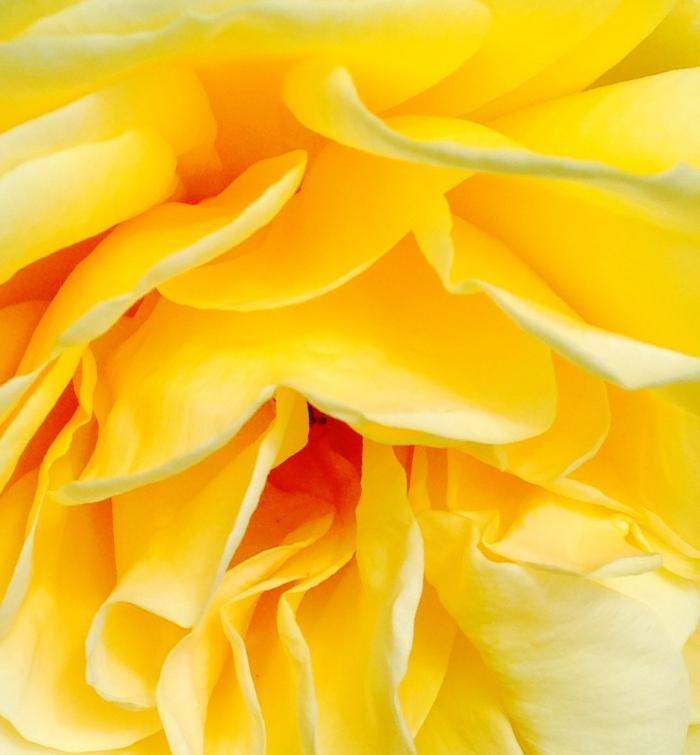 PRETTY FLOWER 6