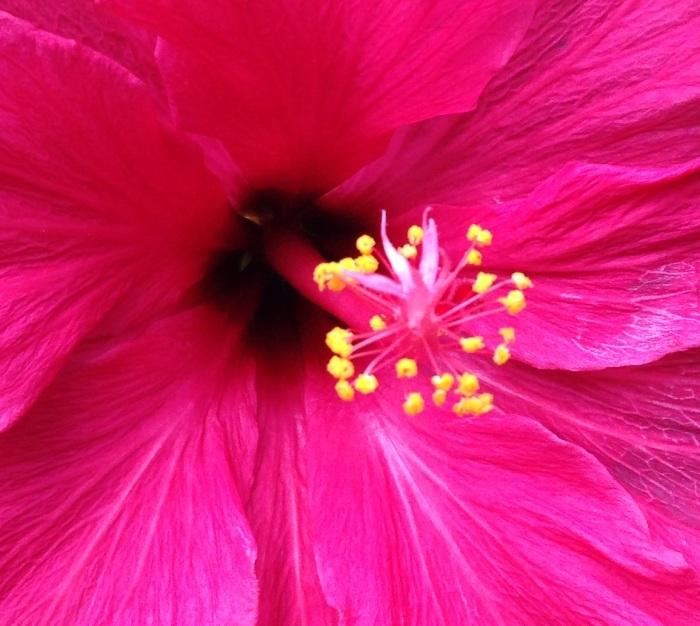 PRETTY FLOWR 2