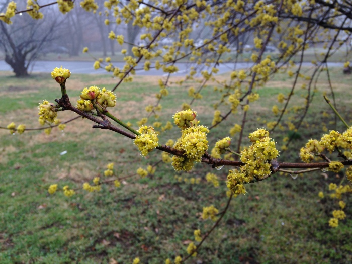 It was a pretty dismal day, but look at this! Signs of spring!