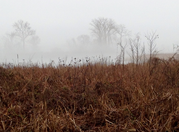 Potomac 8 Wetlands
