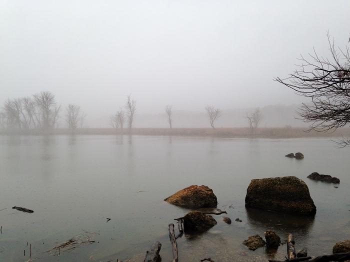 Potomac 9 Stones and Trees