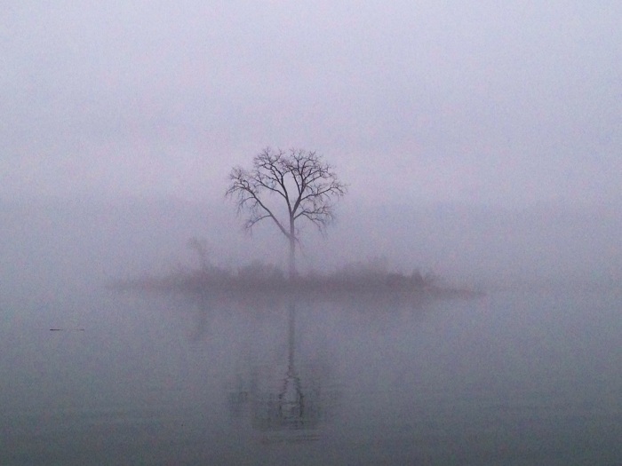 And now here's a ghost tree. I thought this tree looked pretty cool...just one lone tree on a tiny island.