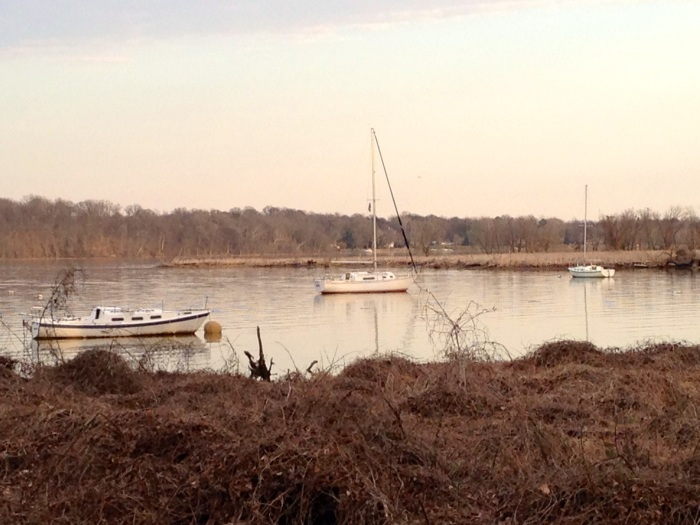 This is what the Belle Haven Marina looks like without fog. No more ghost boats or ghost trees. This is a view of the Marina from Dyke Marsh Preserve.