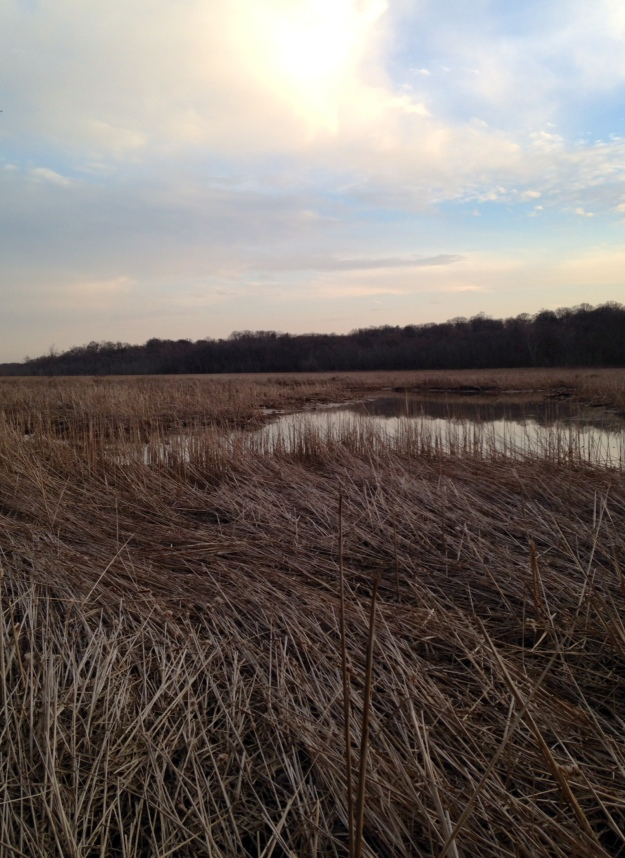 Wetlands, sunset and winter vegetation.