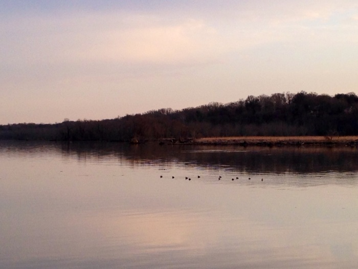 Ducks going for a swim at sunset. Dyke Marsh sounds like birds.