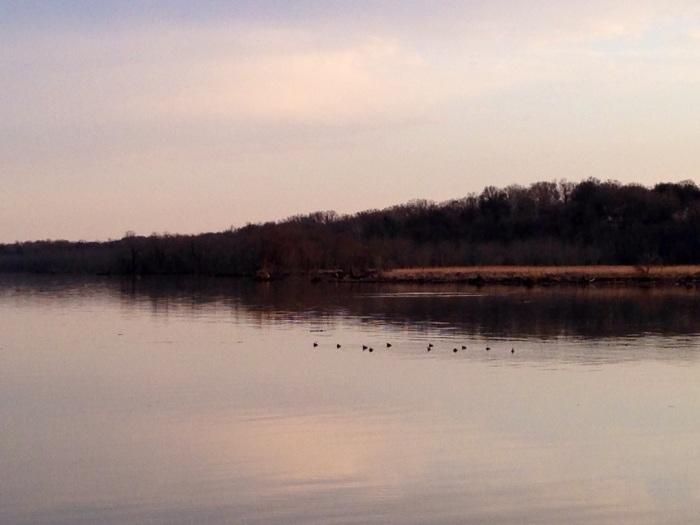 Ducks going for a swim at sunset. Dyke Marsh sounds like birds.