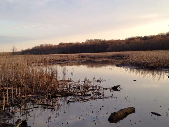 Dyke Marsh at sunset without the fog. A very still place, but not nearly as spooky as it looked last Saturday.