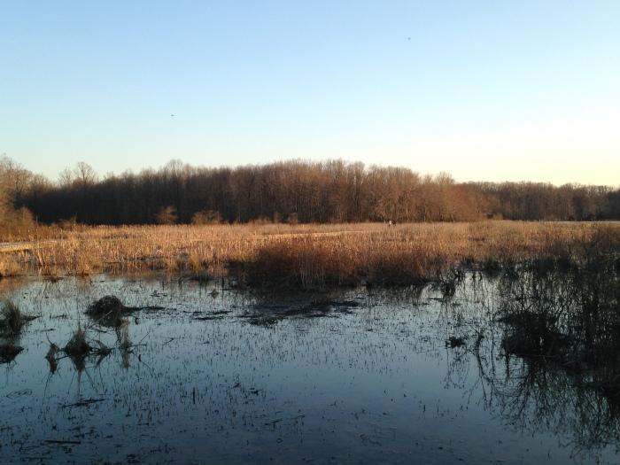 Huntley Meadows 3