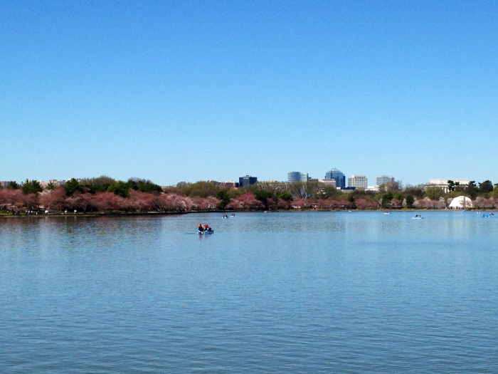 Paddleboating on the Potomac in the Tidal Basin, surrounded by monuments and cherry blossoms.
