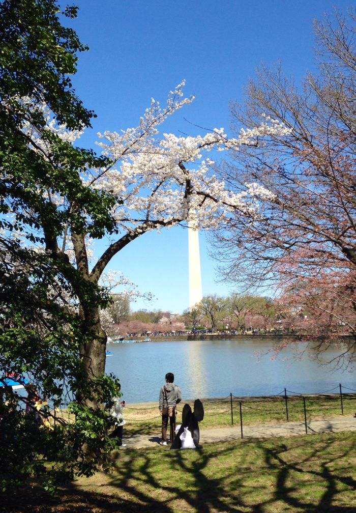 The Washington Monument and one of the few cherry blossom trees actually in bloom this past weekend.