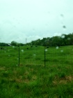 The weekend started out rainy. Here you can see a bunch of cows and raindrops.