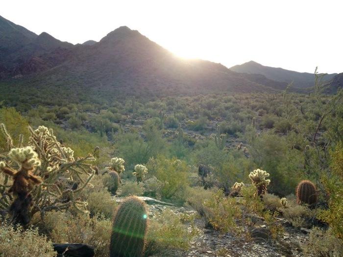 Phoenix 9 Mcdowell Sonoran Preserve