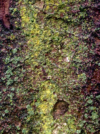 Colorful tree bark growth, up close.