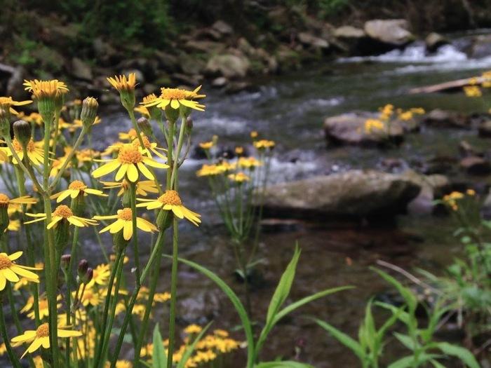 Sperryville, VA 7 creek