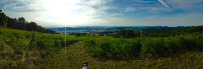 Alfie (my dog) looks out on the horizon and ponders the great unknown. Also, my first successful panorama ever.