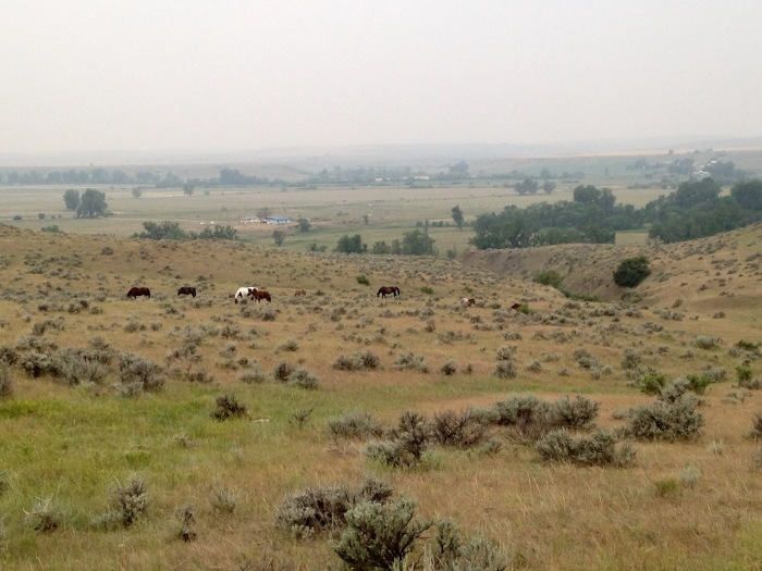 Mustangs Wyoming