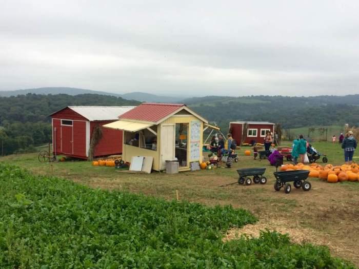 farm-3-hollin-farm