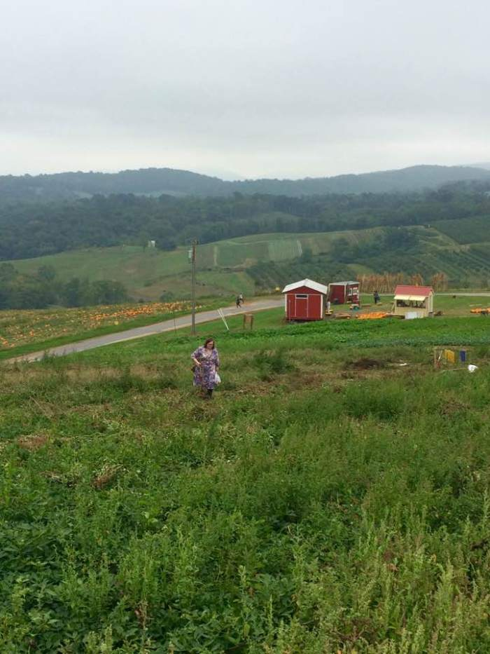 farm-4-hollin-farm
