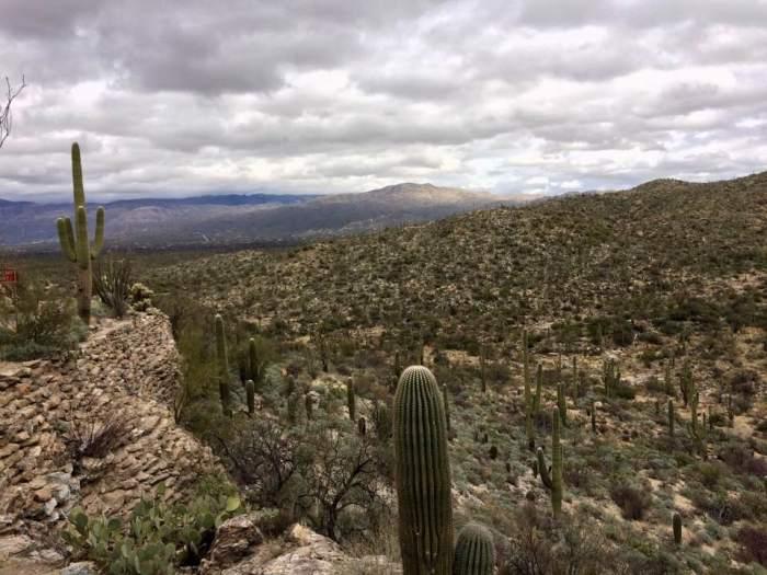arizona-saguaro-national-park-vegetation-2