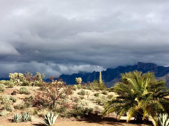 arizona-saguaro-national-park-vegetation