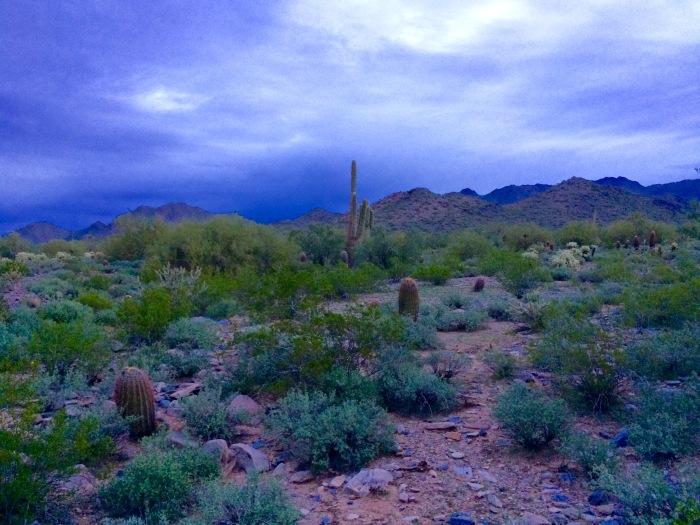 McDowell Sonoran Preserve at daybreak.jpg
