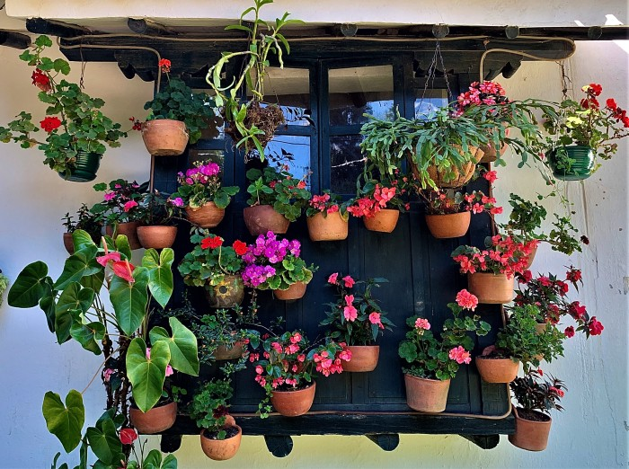 Colombia_VDL_Flowers