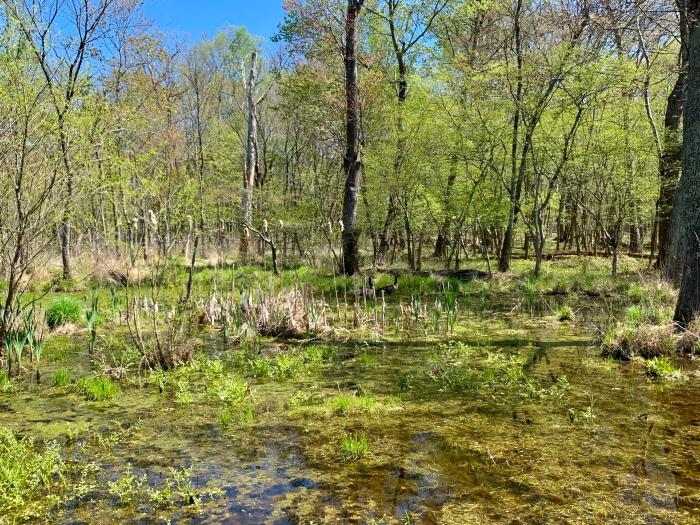Walk Marsh 1